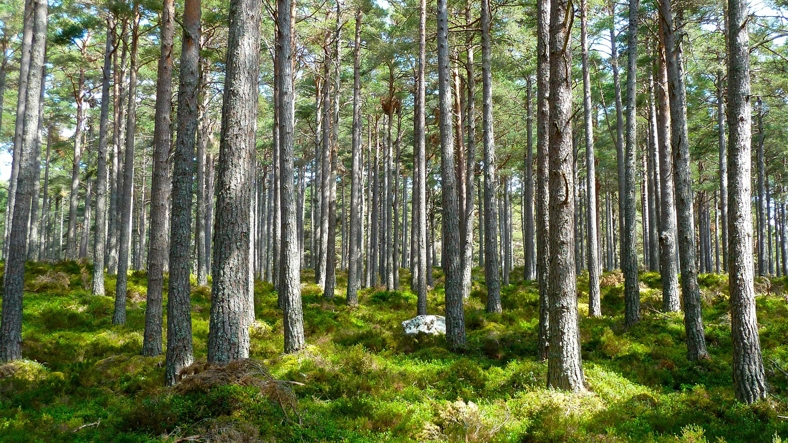Solutions-Civil_Government-Forestry