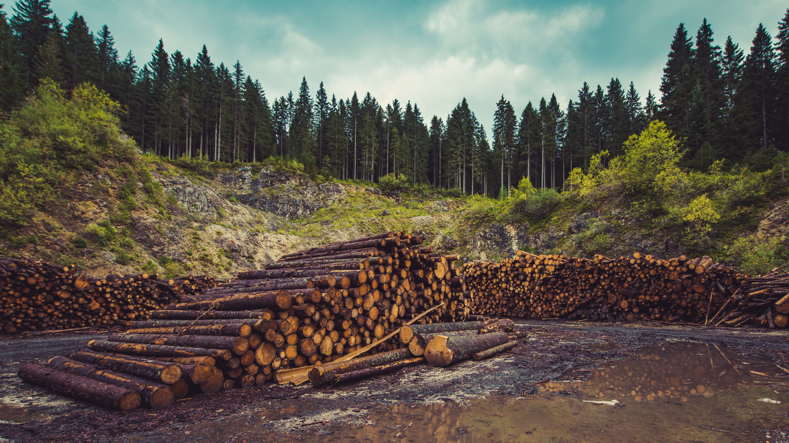 Solutions-Civil_Government-Forestry_ICEYE_1